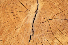 Annual Rings On A Sawn Trunk, Old Tree Stump Background. Wood Texture