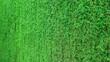 Duży zielony żywopłot, równo przycięty  z tui. Big green hedge.