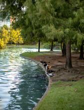 Dia De Descanso En Parque De La Ciudad