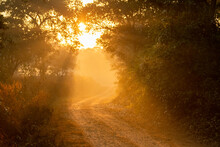 Scenic Forest Road Or Trail With Warm Feel In Cold Winter Morning Fog Or Mist And Orange Color Sunlight Or Sunrays Scattering Making Tyndall Effect With Canopy Of Trees In Jungle Of Central India