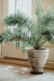 Fototapeta Kawa jest smaczna - Tropical houseplant green palm in retro stylized pot standing on floor at home