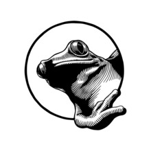 Frog On A White, Hand Drawn Illustration