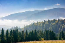 Coniferous Forest On The Hill. Nature Scenery On A Bright Foggy Morning. Beautiful Mountain Landscape In Autumn With Clouds On The Sky