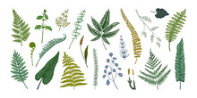 Fern Leaves. Hand Drawn Sketch Of Forest Foliage. Plant Bourgeons And Sprouts. Bracken Or Horsetail Fronds. Vintage Botanical Collection Graphic Template. Vector Flora Elements Set