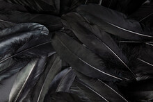 Black Feather Abstract Background Texture Dark Modern Design, Peace Of Bird Wing