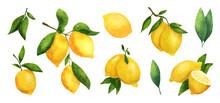 Watercolor Set Of Ripe Lemons. Fresh Lemons On A Branch With Leaves.