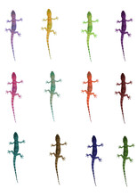 Vertical Shot Of Colorful Lizards On A White Background