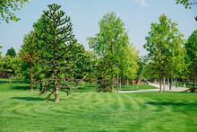 A Beautiful Public Park. Tall Trees Of Different Breeds. Green Manicured Lawn.