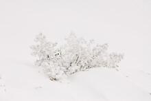 Snowy Trees On Ridge Under Light Sky In Wintertime
