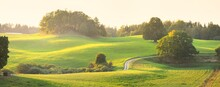 Picturesque Panoramic Scenery Of The Green Hills And Meadows (agricultural Fields) At Sunset. Sheeps Grazing, Close-up. Forest In The Background. Idyllic Rural Scene. Pastoral Landscape. New Zealand