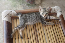 Cat Lying On The Wood Table