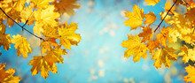 Autumn Yellow Maple Leaves On A Blurred Forest Background, Very Shallow Focus. Colorful Foliage In The Autumn Park. Excellent Background On The Theme Of Autumn. Panoramic View.