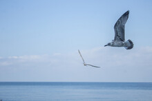Two Seagulls Flying Over The Sea