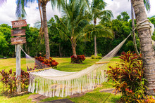 Hammock In Tropical Garden With Trees