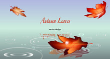 Autumn Background With Leaves And Puddle