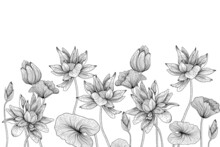 Vector Linear Graphic Illustration Of Black And White Water Lilies Flowers And Leaves