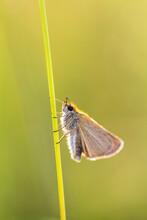 Macro Of A Little Butterfly.