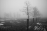Fototapeta Na sufit - Drzewa na zamglonym polu w zimowe popołudnie
