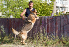 Dog Training. A German Shepherd Dog In Training. The Dog Trains Against The Background Of Tall City Houses.