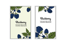 Great For Labels, Poster, Prints. Vector Illustration Of Blueberries