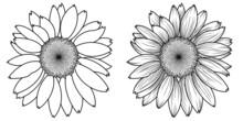 Monochrome Set Of Two Sunflower Flowers
