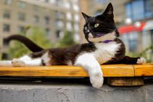 Street Black Cat Basking In The Sun On Bench.