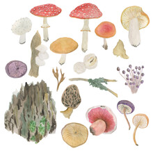 Watercolor Painting Set Of  Forest Mushrooms And Tree Bark, Moss. Rustic Design Elements