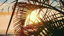 The Leaves Of A Coconut Tree Sway In The Wind Against The Blue Sky At Sunset. Incredibly Beautiful Sunset At Waikiki Beach, Oahu, Hawaii.