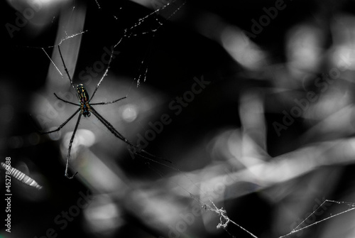 Fotografie, Obraz Spider on web