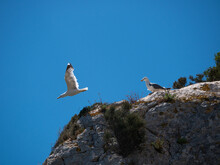 Seagull Looks At Another As It Flies Away On The Edge Of The Cliff