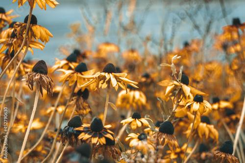 Abstrakcyjne ujęcie kwiatów w ogrodzie.