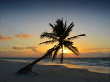 Sunrise On Tulum Beach With Coconut Palm Tree Silhouette, Yucatan, Mexico.