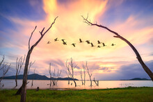 Dead Trees In The Water, Spring At The Lake With Sunset