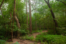 Dry Creek Bed In A Summer Woods On A Slightly Misty Morning