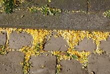 Kopfsteinpflaster, Pflastersteine Mit Gelben Blütenblättern, Deutschland