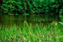 Grass Growing In Front Of The Lake, Natural Background