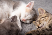 Three Different Coloured Cats Sleeping Together. Little Brother And Sister Kittens Sleeping