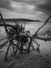 Dry Dead Tree's Root On Peaceful Beach In Dramatic Cloudy Sky. Koh Mat Sum Island, Near Koh Samui, Thailand. Black And White.