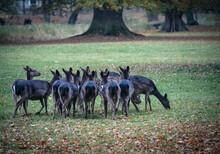 Deer Fawn Autumn Park Beautiful Deer Close-up
