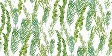 Traditional Jewish Holiday Sukkot Seamless Pattern. Jewish Torah Lulav Date Palm, Etrog Citron, Arava Willow And Hadas Myrtle Isolated On White. Repeating With Etrog, Lulav, Arava, Hadas. Vector