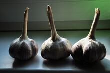 Garlic On The Windowsill. Background, Texture. Three Heads Of Garlic, Close-up.