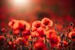 Leinwandbild Motiv Roter Mohn im Sonnenuntergang - stimmungsvoll