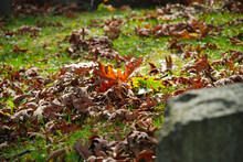Autumn Leaves In The Graveyard In The Homewood Cemetery, Pittsburgh, Pennsylvania, USA