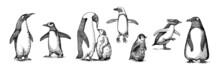 Emperor Penguin Colony. Adult With Juveniles. Small Family Set. Vector Graphics Black And White Drawing. Hand Drawn Sketch. Group Of Aquatic Flightless Birds. African And Gentoo And King Chick