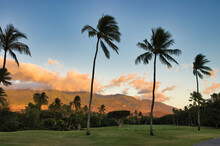 Palm Tree Lined Fairway At Sunset With West Maui Mountains In The Background.