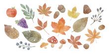 水彩風 紅葉と落ち葉の秋の植物のイラスト素材 セット