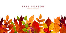 Fall Leaves, Hand Drawn Vector Watercolor Illustration