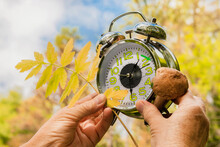 Woman's Hands Hold An Alarm Clock With A Mushroom And A Leaf Of A Tree On The Background Of An Autumn Forest. The Concept Of Converting Clocks To Winter Time