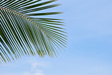 Close Up Palm Tree Leaves Over Clear Blue Sky