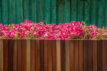 Colorful Petunia Flowers On A City Street In A Wooden Pot. Floral Landscaping Brings A Riot Of Color To City Streets